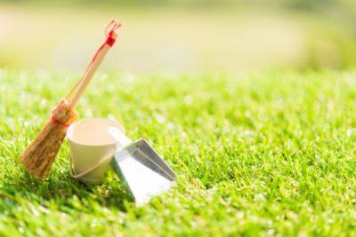 芝生の手入れのやり方