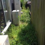 雑草が大変な庭